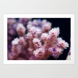 Fall Colors of the Sea Art Print