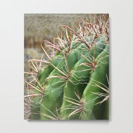 cactus 01 - desert botanical photography Metal Print