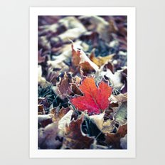 Oh Canada - Red Maple Leaf Art Print