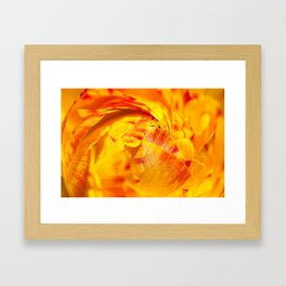 ranunculus red/orange Framed Art Print