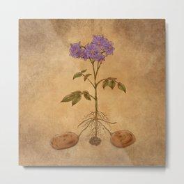 Anatomy of a Potato Plant Metal Print