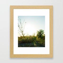 Field Brush Framed Art Print