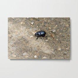 Beetle walking around rocky terrain. Metal Print