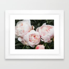 Flower Photography   Peonies Cluster   Blush Pink Floral   Peony Framed Art Print
