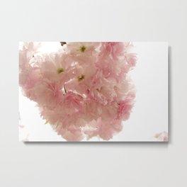 Baby Pink Metal Print