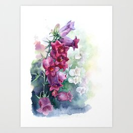 Campanula watercolor flowers aquarelle bellflowers Art Print