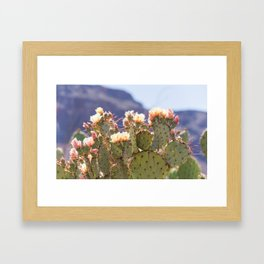 Prickly Pear Cactus Blooms, II Framed Art Print