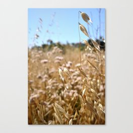 fields of gold. Canvas Print