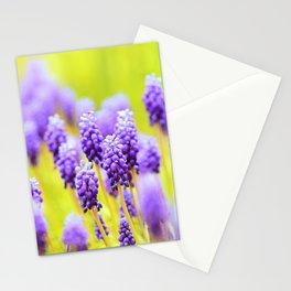Muscari close-up Stationery Cards