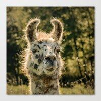 llama Canvas Prints featuring Llama by LudaNayvelt