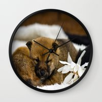 shiba inu Wall Clocks featuring Red Shiba Inu Puppy by Blue Lightning Creative