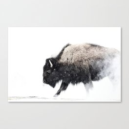 Prancing Buffalo Canvas Print