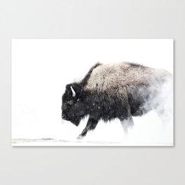 Prancing Buffalo Canvas Print