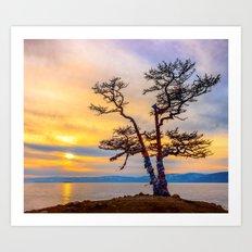 Baikal pine Art Print