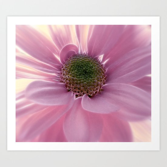 Softly in Pink Art Print