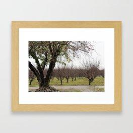 Almond Pond Framed Art Print