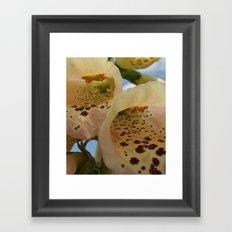 Foxglove Flowers Framed Art Print