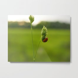 Climbing Lady Bug Metal Print