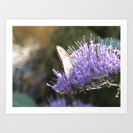 Butterfly and the lilac flower Art Print