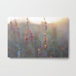 Wildflowers at Sunse Metal Print