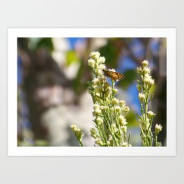 Butterfly Cafe Art Print