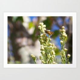 Butterfly Cafe Art Print