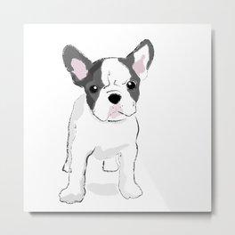 Puppy, Bulldog, French Bulldog Metal Print