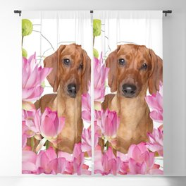 Dog in Field of Lotos Flower Blackout Curtain