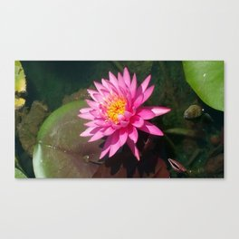 Zenful Pink Water Lily Canvas Print