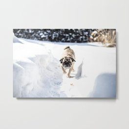 Pug in the snow. Metal Print