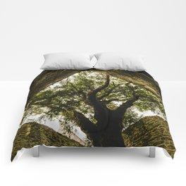 Under the Yew Comforters