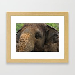 Elephant closeup Framed Art Print