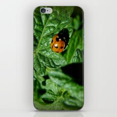 Ladybug's Journey iPhone & iPod Skin