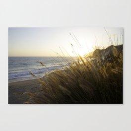 Sunset Grass Canvas Print