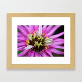 Macro Violet Flower Framed Art Print