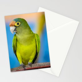 Green Parakeet on Chair in Nicaragua Stationery Cards