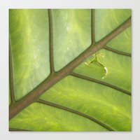 banana leaf Canvas Prints featuring Banana Leaf by FlightsofColor
