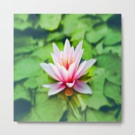 Pink Lotus Waterlily & Green Lily Pads Metal Print