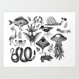 Curiosity Cabinet Collection Art Print