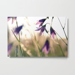 Bluebells in the meadow  Metal Print