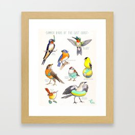 Summer Birds of the East Coast Framed Art Print