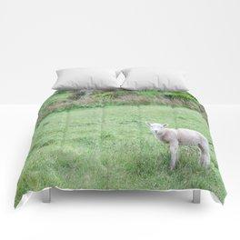 'Sup - Lamb in New Zealand Comforters