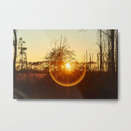 Low Sunset Behind The Trees. Metal Print