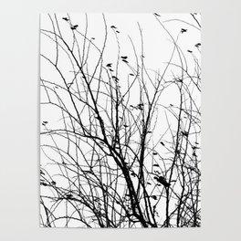Black white tree branch bird nature pattern Poster