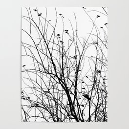 Black white tree branch bird nature pattern Poster
