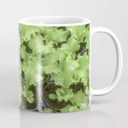 Lettuce Hydroponic farm, Lettuce Sprouts, Green Young Lettuce Plants Coffee Mug