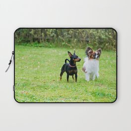 Outdoor portrait of a miniature pinscher and papillon purebreed dogs on the grass Laptop Sleeve