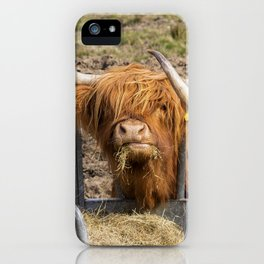 Cute hungry ginger Scottish Highland cow iPhone Case