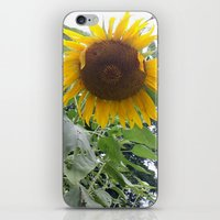 oklahoma iPhone & iPod Skins featuring Oklahoma Sun by Ariel
