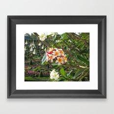 rosa Frangipane Framed Art Print